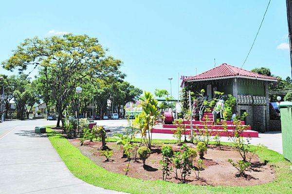 Pinheiral: O verde fica cada vez mais raro (Foto: Pinheiral)