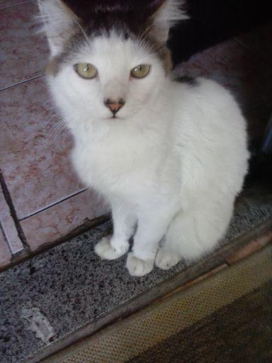 Sem notícias: Eugênio tem pouco mais de um ano de idade e está desaparecido desde o dia 1º de junho ( Foto: Arquivo pessoal)
