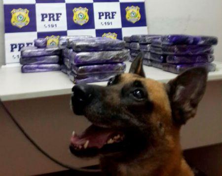 Cães farejadores ajudaram a encontrar drogas (foto: Cedida pela PRF)