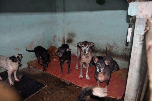 Exigências: canil terá de se adequar e até mudar de lugar para abrigar 149 animais (foto: Divulgação)