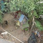 Abandono: Cães estavam sendo deixados com pouca água e comida, em uma casa no bairro Padre Josimo, em Volta Redonda