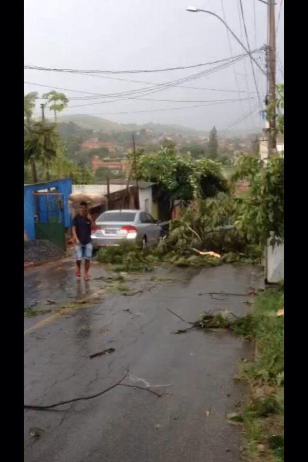Árvore caiu no bairro Padre Josimo, em Volta Redonda (Enviada via WhatsApp)