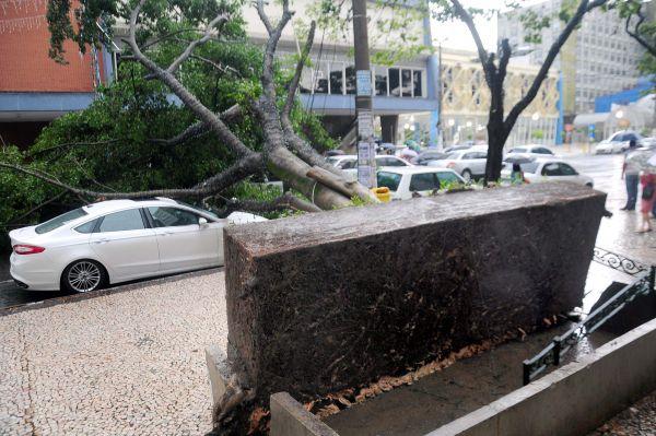 Queda: Árvore no Largo 9 de Abril caiu sobre três carros, na Vila Santa Cecília (Foto: Paulo Dimas)