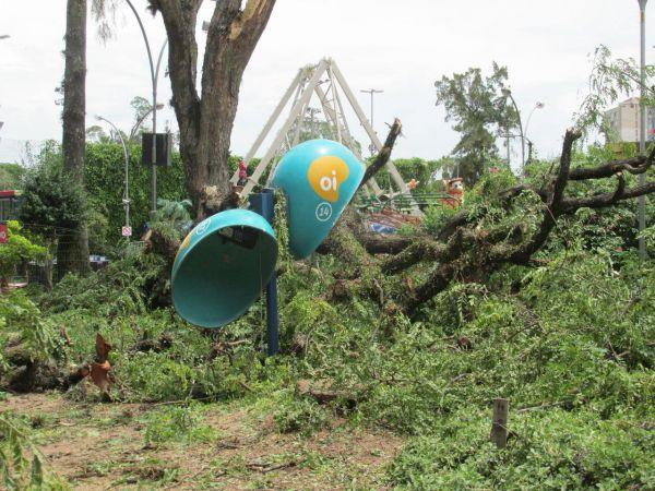 Devastação: Árvores gigantes tombaram com a força do vento (Foto: Arquivo)