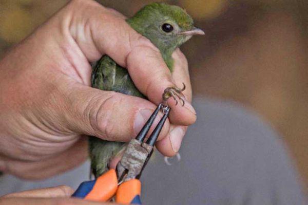 Meio ambiente: Parque Nacional da Serra da Bocaina foi considerado uma das áreas mais importantes para a conservação das aves do país
