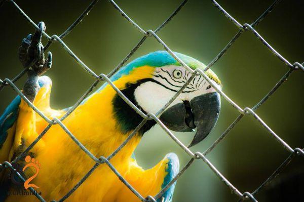 Projeto Cliques Especiais: Primeiro evento aconteceu no Zoológico de Volta Redonda (Fotos: Divulgação)