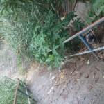 Mato alto e sujeira: Moradora pediu a limpeza da área perto do escadão e a melhoria da iluminação (Foto: Enviada pelo WhatsApp por Luciene de Almeida)