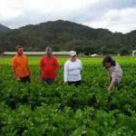 No campo: Recursos para o programa são provenientes de financiamento do Banco Mundial (Foto:  Divulgação)