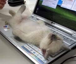 Preguiça: Gatos são mais preguiçosos e adoram brincar (Fotos: Divulgação)