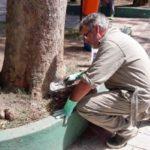 Cuidados com a natureza: Remoção de lesões, aplicação de calda bordalesa e o selamento dos orifícios das árvores são feitos (Foto: Divulgação PMP)