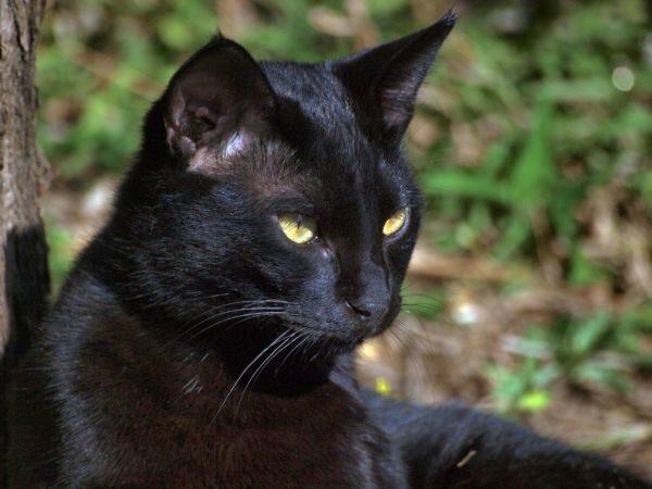 Gato preto: Qualquer pessoa minimamente esclarecida nos dias de hoje não tolera qualquer tipo de preconceito (Fotos: Divulgação)