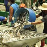 2013-02-16_abertura-pesca-da-sardinha_fotografo_luis-fernando-la-239