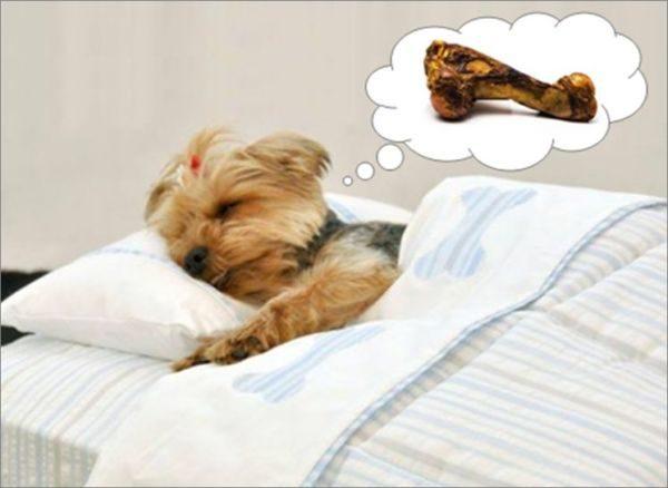 Adormecidos: Apesar da grande quantidade de pesquisas sobre os sonhos dos cães, ainda não se tem uma certeza sobre o que eles sonham (Fotos: Divulgação)