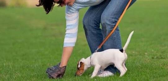 Bons hábitos: Posse responsável do animal vai além dos cuidados básicos com alimentação e vacinação (Foto: Divulgação)