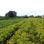 lavoura_agricultura_familiar
