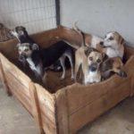 Ração acabou: Cachorros de abrigo precisam com urgência de ração Kanina, Zorro ou Nero (Foto: Divulgação)