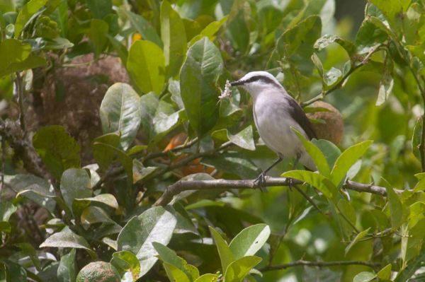 Variedade: Cerca de 57 espécies podem ser avistadas na área do espaço educativo e cultural (Fotos: Divulgação)