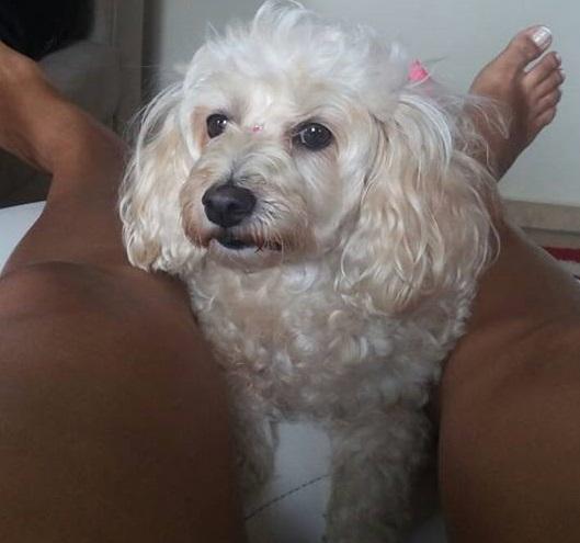 cachorra desaparecida