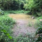Diagnóstico: Para o secretário de Meio Ambiente será necessário um trabalho de recuperação desde a sede administrativa do horto até a parte florestal (Foto: Divulgação PMBM)