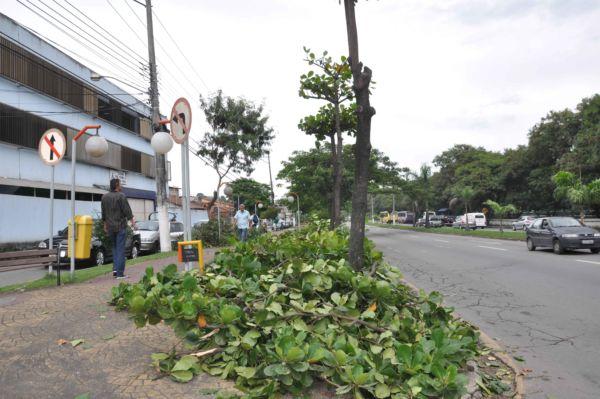 Somente urgência: Poda e corte de árvores só ocorrerá em casos de risco à segurança da população (Foto: Arquivo)