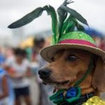 Com consciência: É preciso tomar alguns cuidados ao curtir o Carnaval com seu pet (Foto: Divulgação)