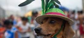Aproveite o Carnaval com seu animalzinho