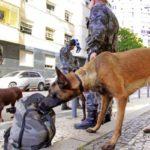 Com cães: Policiais militares apreenderam três toneladas de drogas apenas no início deste ano (Foto: Philippe Lima)