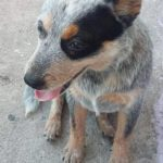 Cachorrinha desapareceu no bairro Mote Castelo, em Volta Redonda (foto: Enviada pelo Facebook)