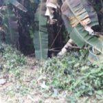 Corpo foi encontrado na localidade conhecida como Chapéu do Sol, no Sertão de Mambucaba