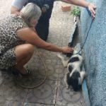 Marcello Russo encontrou um dos animais preso (Foto: Cedida pela Polícia Civil)