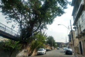 Árvore tomba e preocupa moradora em Barra Mansa