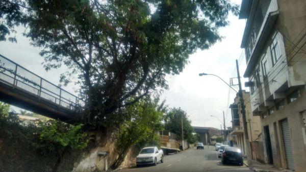 Preocupação: Árvore fica em frente a um prédio na Rua Siqueira Campos, no bairro Saudade (Foto: Enviada via WhatsApp)