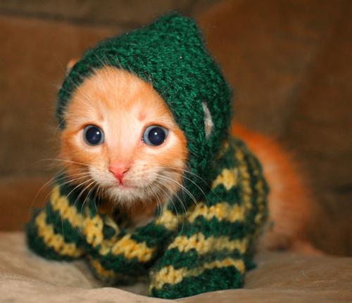 Aquecido: Mantenha o animal protegido do frio e diminua a frequência dos banhos (Fotos: Divulgação)