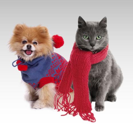 Sem estresse: Se o seu pet não está acostumado a usar roupinhas ou apresenta comportamento negativo ao vesti-las, não force a barra (Fotos: Divulgação)