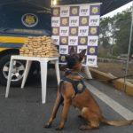 Apreensão: Cão farejador (K9) Aruak indicou a presença de drogas numa mala de viagem no bagageiro externo (Foto: Cedida pela PRF)