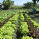 Ideia com a iniciativa é valorizar quem vive do campo no município