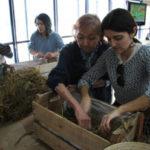 Melhor: O cultivo em palha traz várias vantagens sobre o sistema convencional