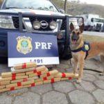 Tabletes de  maconha foram encontrados pela cadela Estella (Foto: Cedida pela PRF)