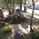 Entre as espécies de flores que vão ser cultivadas estão lantana, cravina, hipisco, rosa do deserto, tarjet e ixora (Foto: Divulgação)