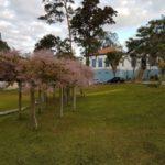 Necessidade: Campus Pinheiral do IFRJ precisa de serviços de manutenção