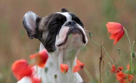 Limpe certo: Muitos odores são causados pela proliferação de bactérias (Fotos: Divulgação)