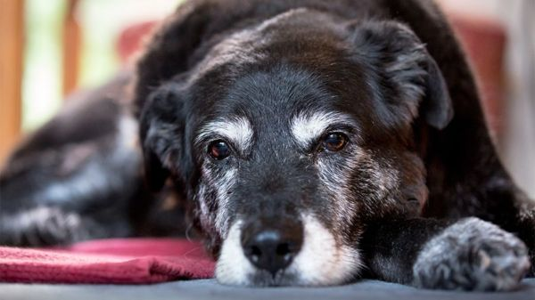 Assim como nós: Existem pets idosos super dispostos e saudáveis (Fotos: Divulgação)