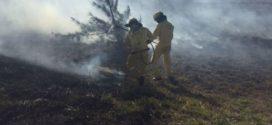 Bombeiros e Guardas-Parques do Inea vêm combatendo incêndios no Estado do Rio de Janeiro