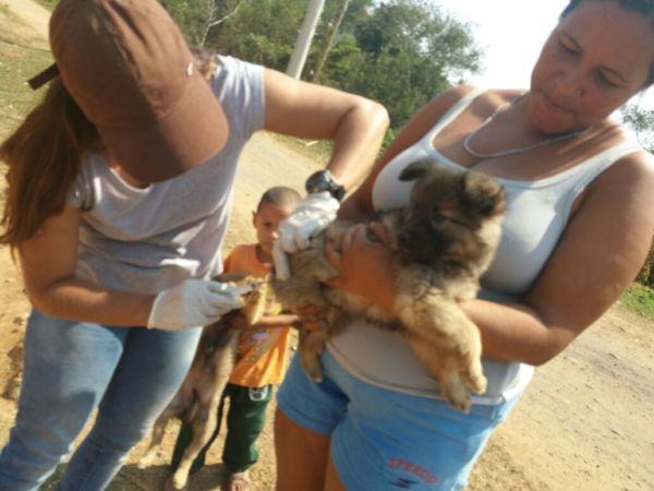 Vacinação de cães e gatos é feita também na zona rural de Quatis