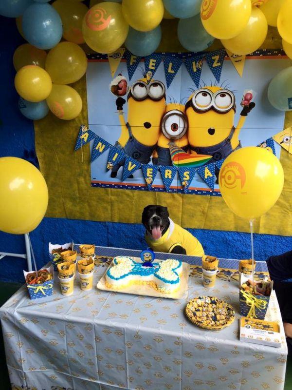 Pets reunidos: Cães a serem convidados devem apresentar um bom comportamento no que se refere a convívio com outros animais (Foto: Divulgação)