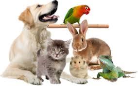 Responsabilidade de todos: Decisão de comprar ou adotar um animal de estimação deve ser discutida em família