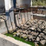 Jacarés estavam amontados em tanques com água de má qualidade, segundo delegado (Foto: Cedida pela Polícia Civil)