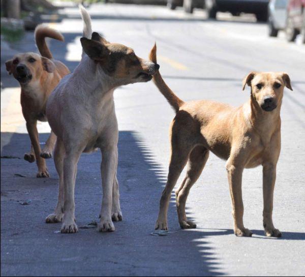 Cuidado animal: Incidência da doença é relativamente pequena nos animais; melhor prevenção é a castração, diz veterinário (Foto: Arquivo)