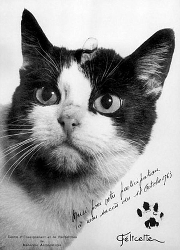 Autógrafo: Foto vem com a pata da felina