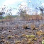 Terreno ficou 'pelado' em diversos trechos por conta do incêndio